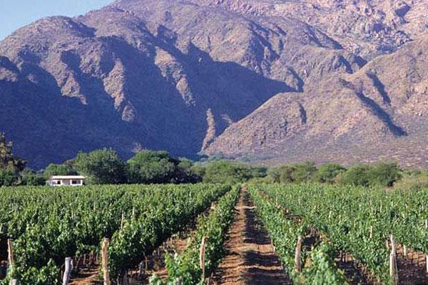 Виноградники Сальта (Salta)