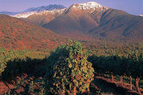 Виноградники Катамарка (Catamarca)