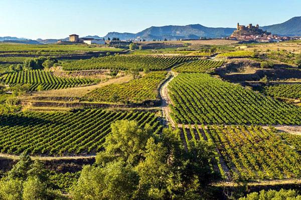 Виноградники Ла-Риоха (La Rioja)