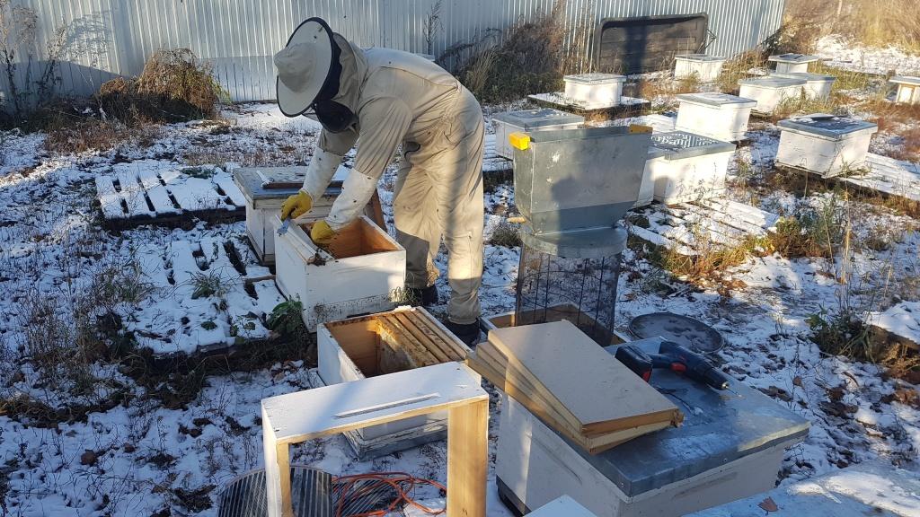 Стряхивание пчел в кассету 2