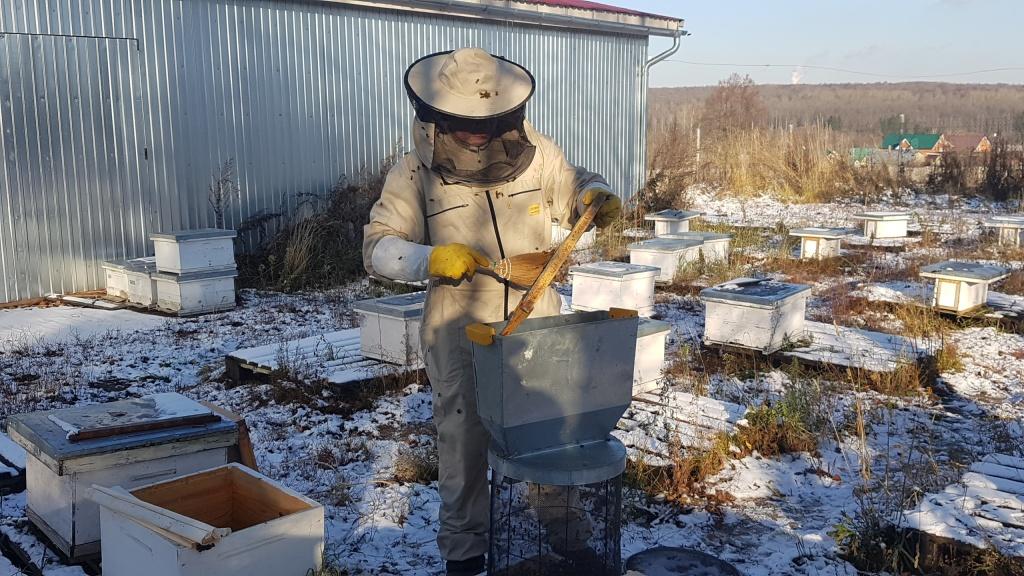 Стряхивание пчел в кассету 6