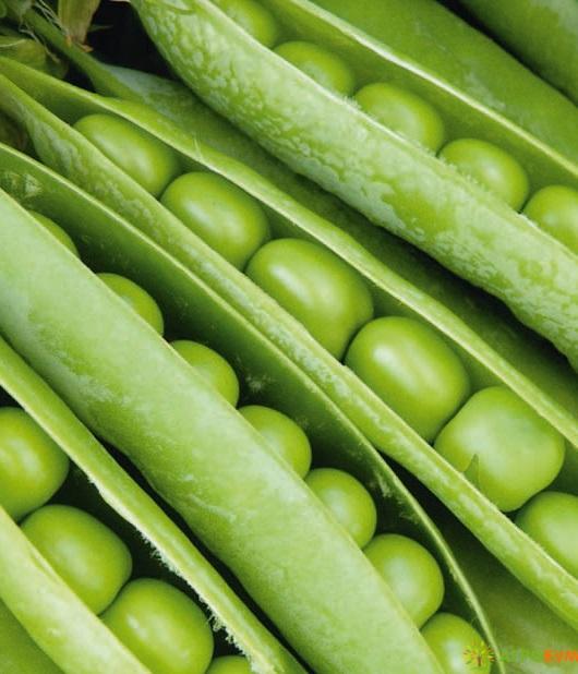 Купить семена Горох Беркут 10 г по низкой цене, доставка почтой наложенным платежом по России, курьером по Москве - интернет-магазин АгроБум