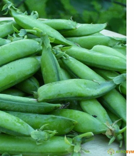 Купить семена Горох Динга 10 г по низкой цене, доставка почтой наложенным платежом по России, курьером по Москве - интернет-магазин АгроБум