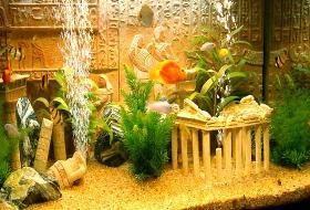 История аквариума