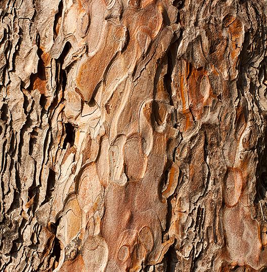 Ноты сердца: Кедровое дерево/Герань/Пачули
