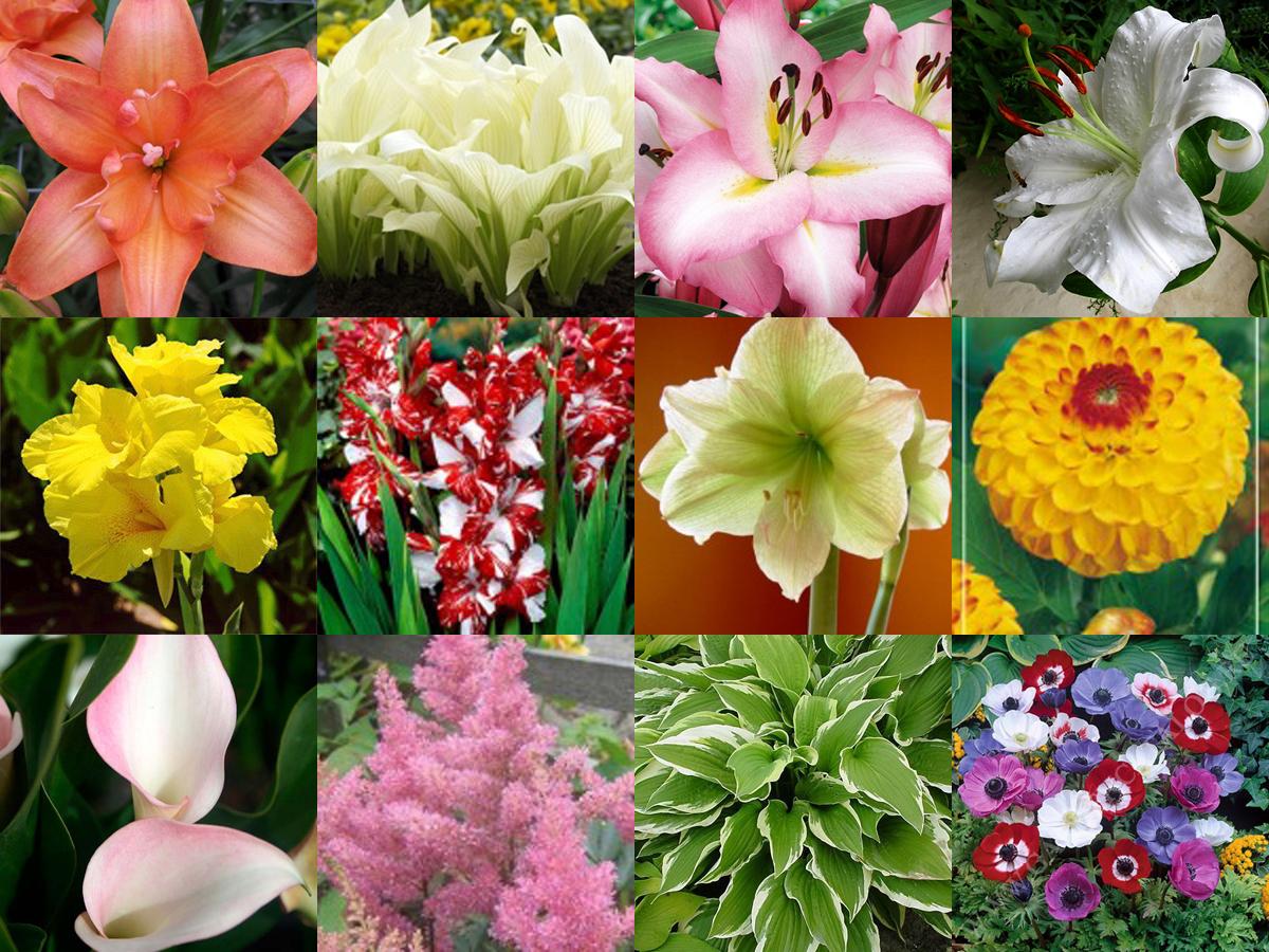 Фотошторы цветы зелень рынке строительных