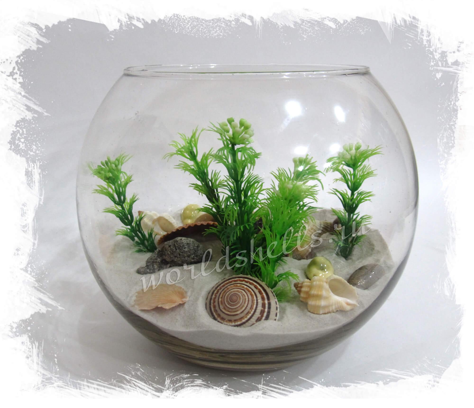 Сухой аквариум