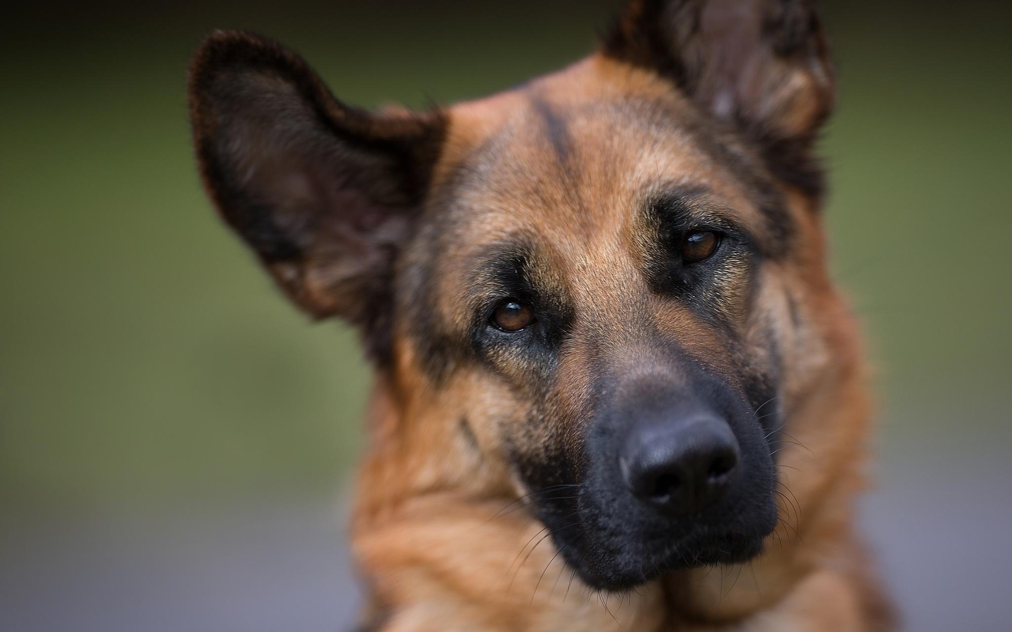 Новый продукт - качественный корм для крупных собак ПУРИНА