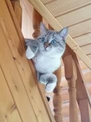 К чему приводит дефицит таурина у кошек