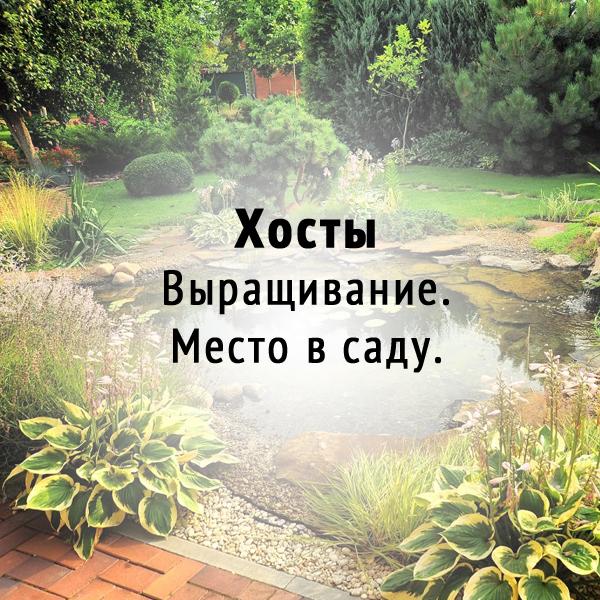 Хосты. Выращивание. Место в саду.
