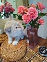 Кормление растущих котят