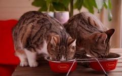 Вкусовые качества корма и пищевые предпочтения кошек