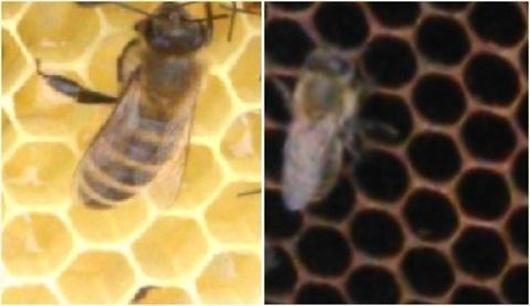 Аллергия на мёд и её основные причины
