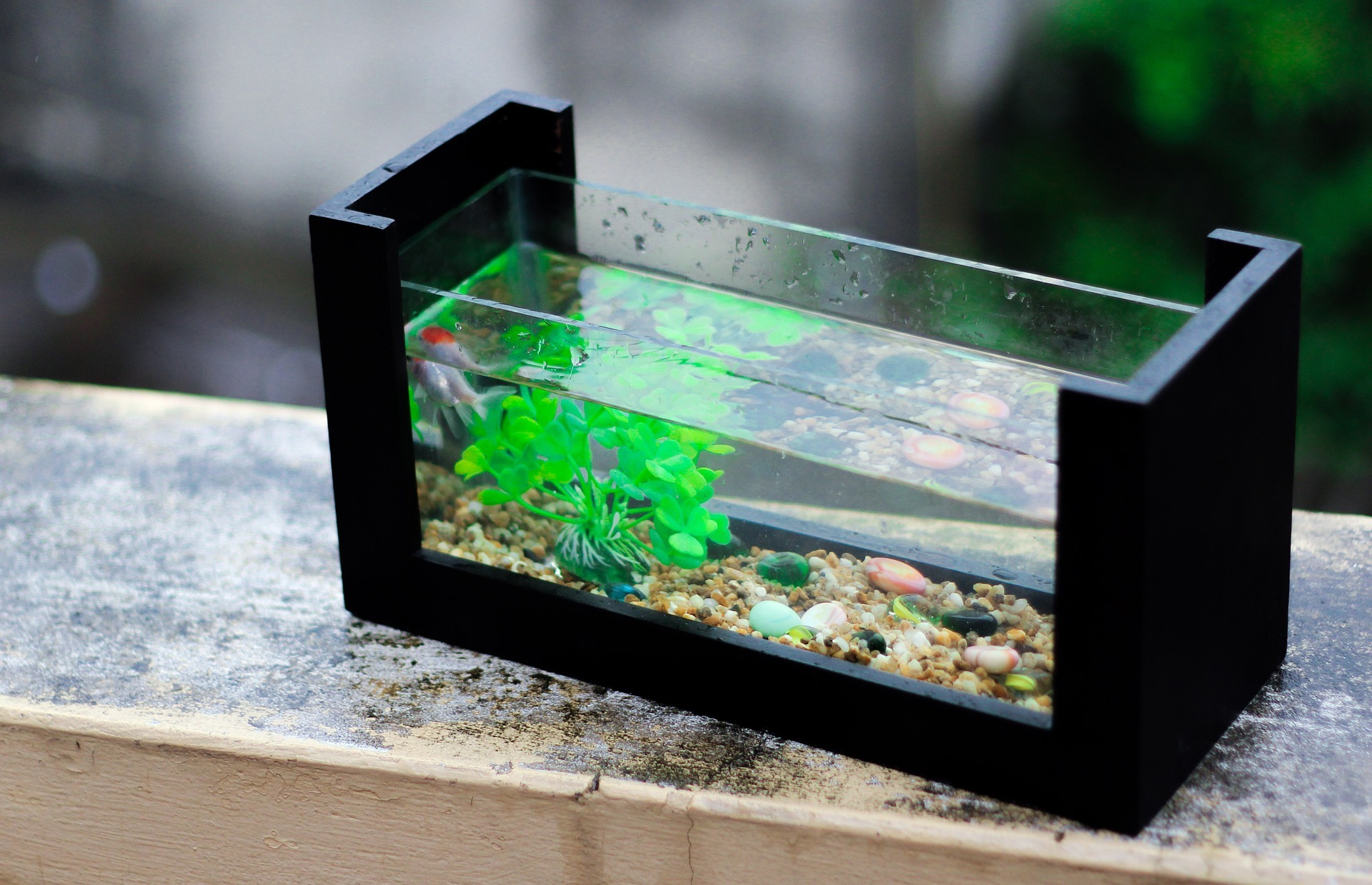 Как выбрать аквариум ребёнку или новичку.