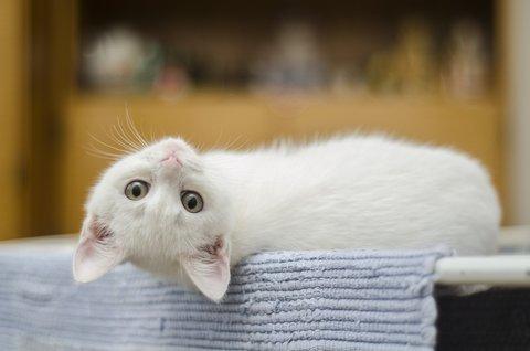 Как справиться с проблемами в поведение кошек.