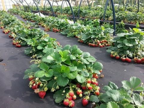 Нужны ли огороднику укрывные материалы?