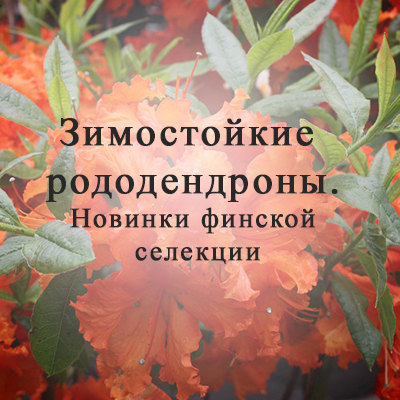 Зимостойкие рододендроны. Финская Коллекция Рододендронов