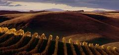 Новая Зеландия: от Мальборо до Окленда