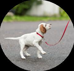Как приучить щенка ходить в туалет на улицу
