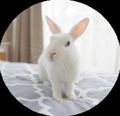 Кролик в доме: что нужно знать