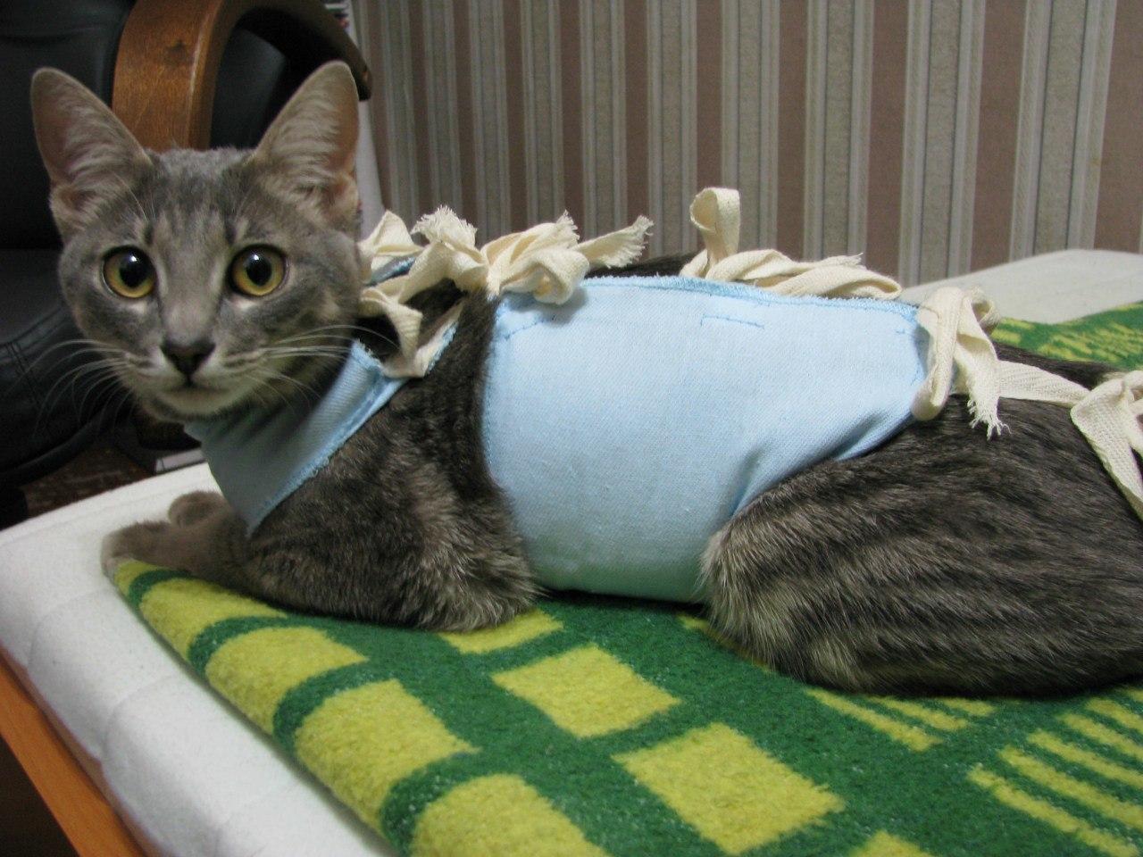 можно ли стерилизовать кошку во время беременности | zoomi-x.ru