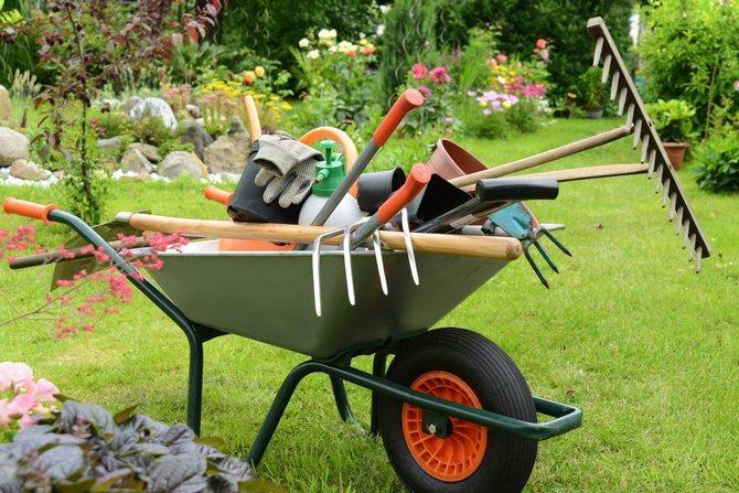 Как подготовить сад к зиме, советы агронома питомника SADGURU