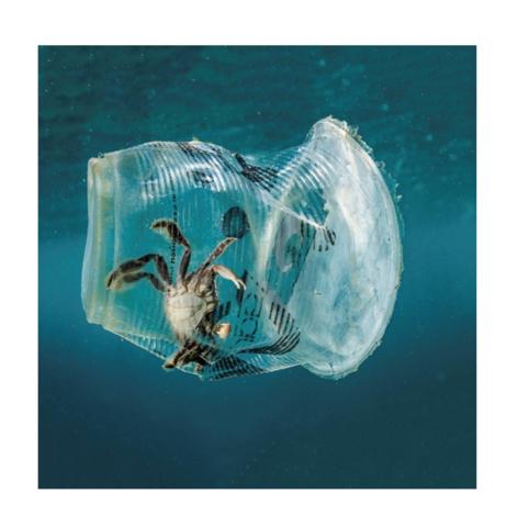 Необычные факты про окаянный пластик от Гринпис
