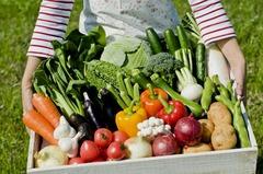 Как защитить урожай от вредителей.
