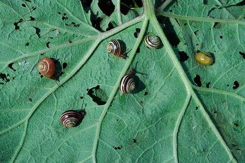 Спасаем урожай от вредителей без химикатов