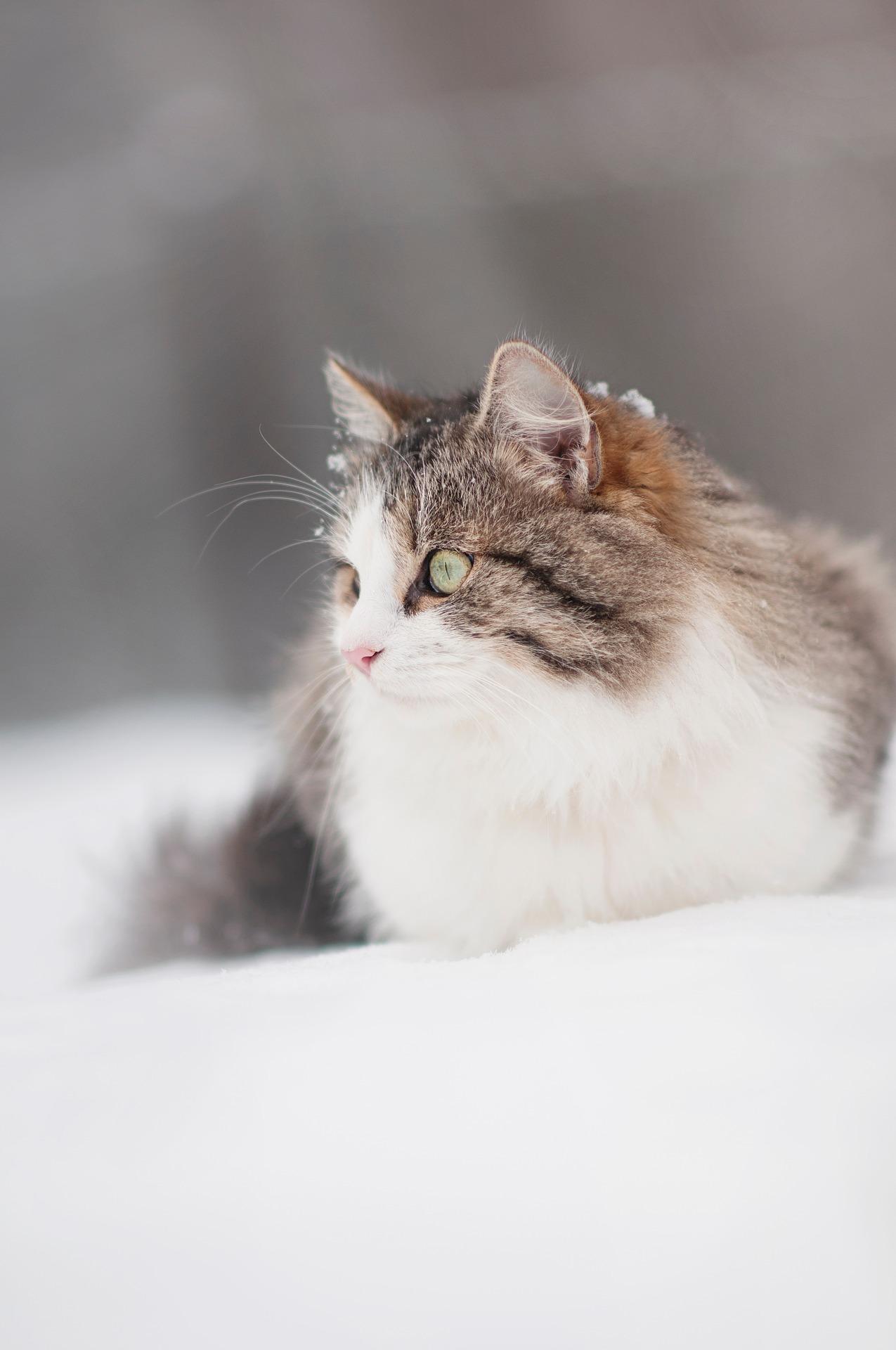 Что необходимо кошке в холодное время года.