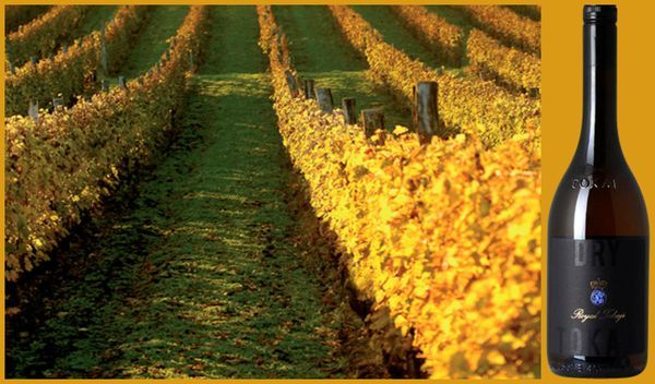 Вино недели с 12 марта - Royal Tokaji Dry Tokaji