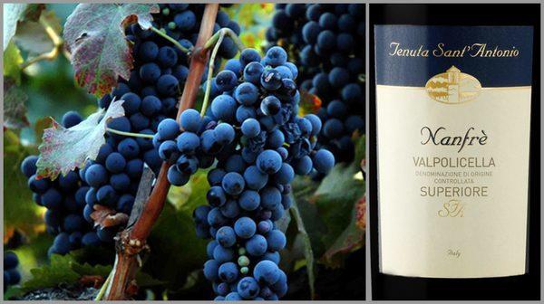 Вино недели с 13 ноября - Tenuta Sant' Antonio Valpolicella Nanfre