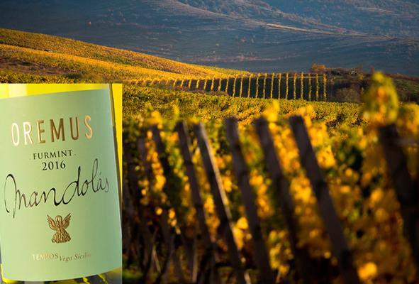 Вино недели с 14 мая - Oremus Tokaj Dry Mandolas 2016