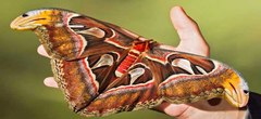Три удивительных факта о бабочках