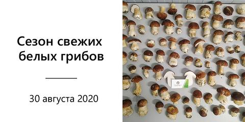 Купить свежие белые грибы с доставкой по Москве