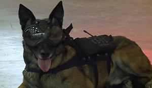 Французские собаки примеряли очки