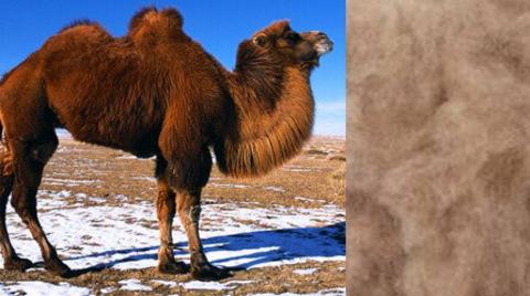 Верблюжья пряжа для ручного вязания - особенности, виды