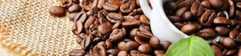 Интервью с кофейными зёрнами: вся правда о бодрящем  напитке