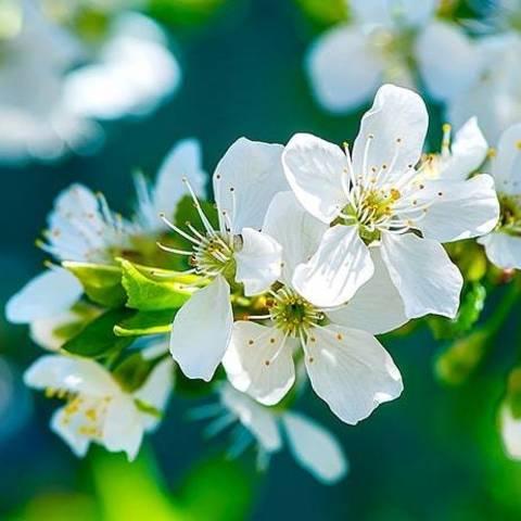 Природа - это способ приобщиться к божественному совершенству