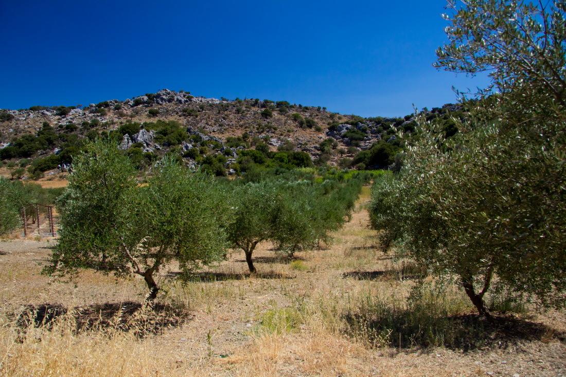Удивительные факты о Греции простым языком
