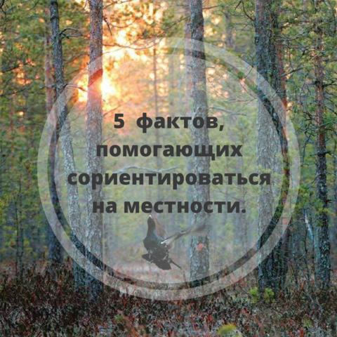 «Советы охотнику».  5  фактов, помогающих сориентироваться на местности.