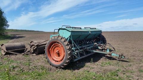 Агротехника фацелии: подготовка почвы, посев