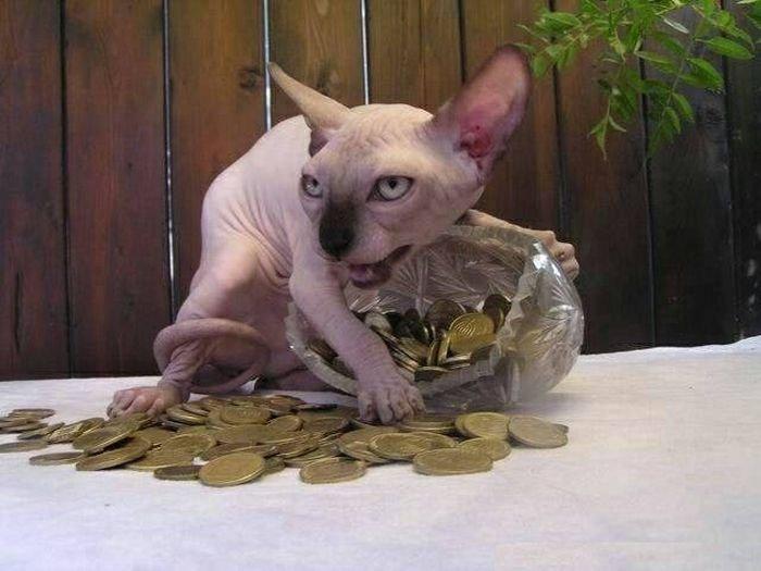 Корм,деньги, два кота