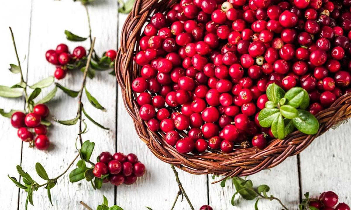 Ягодный сезон не за горами! Что приготовить из свежих ягод и какие выбрать?