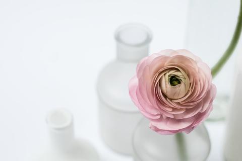 Ранункулюсы - самые нежные цветы