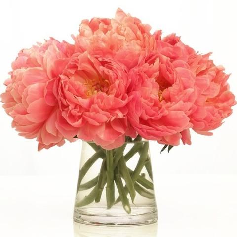 Условия доставки цветов в Алматы