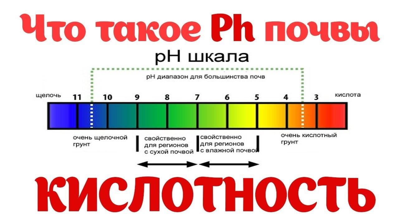 Регуляция кислотности грунта