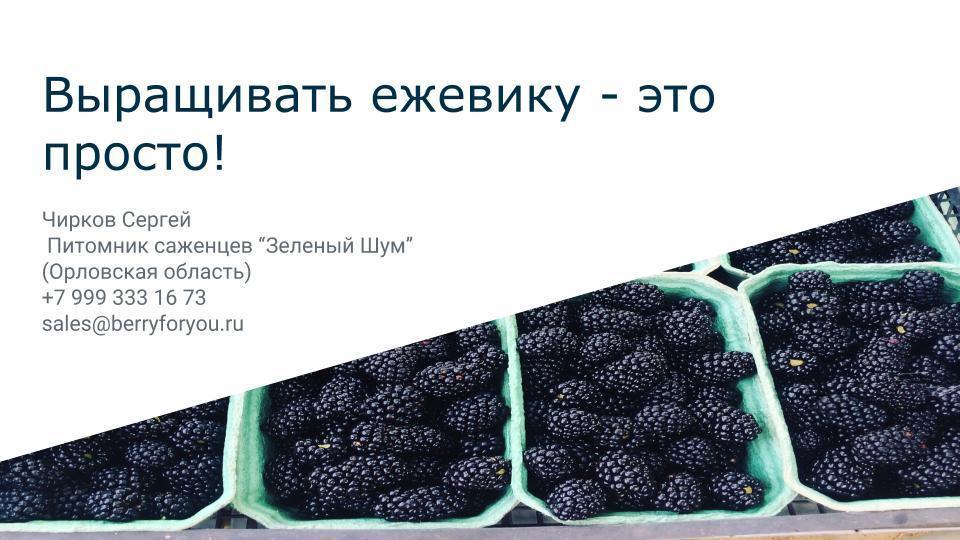 """Онлайн-презентация с лекции """"Выращивать ежевику - это просто!"""" 3.02.2019"""