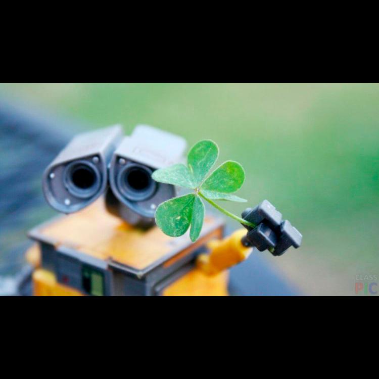 Flora Robotica – симбиоз роботов и растений