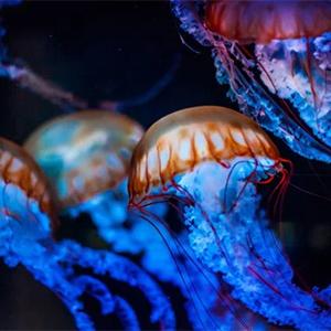 Гибкие роботы исследуют морские глубины